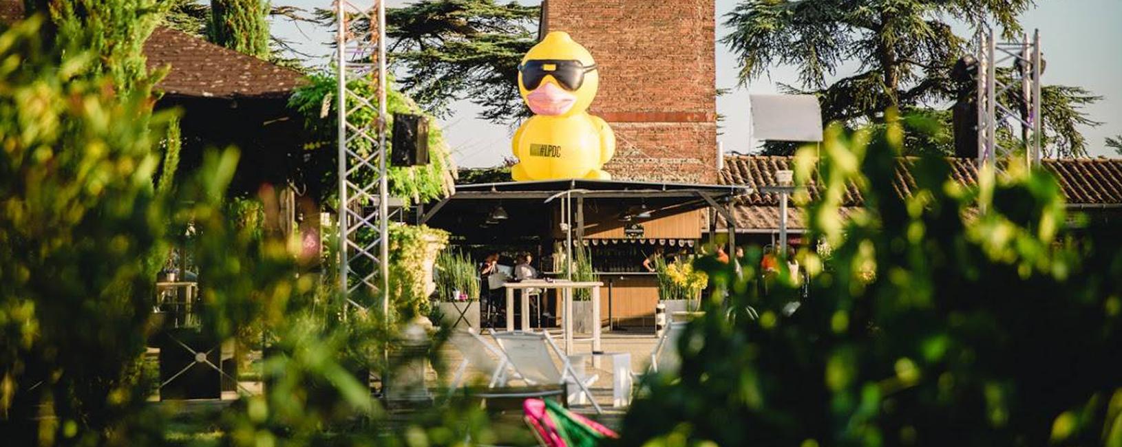 Le canard sur le toit