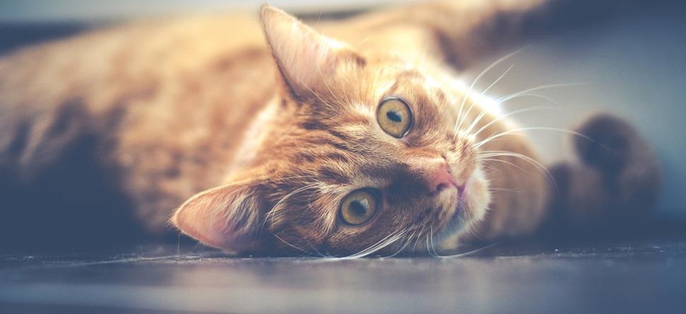 site de rencontre pour chats