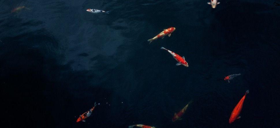 Négron serge sur gratuit et cancer tarot femme homme gardiens poisson anges.